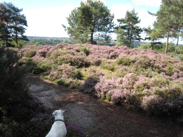 The Heathland